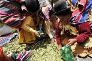 Bolivian indigenous women selling coca leaves