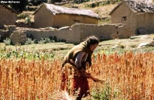 quinoa woman