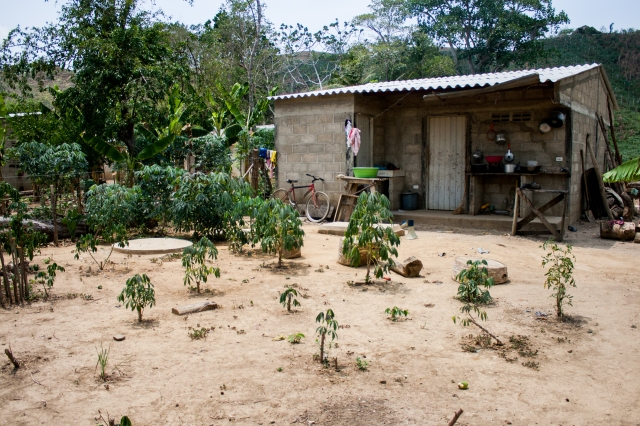 Small family garden in Colombia.  Photo: Anna Vogt